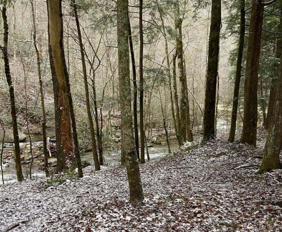 Picture of the trees in the Great Smoky Mountains National Park